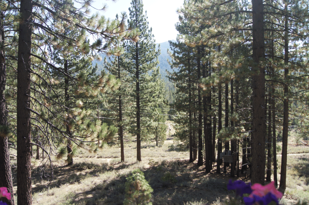 The Forest The Forest | Co-Shared Workplace | South Lake Tahoe, CA